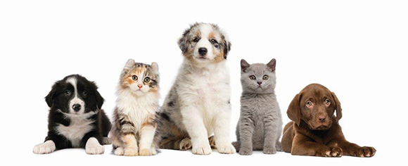 30% Off Products Available Online Only + Free Shipping on $49+ at PetSmart.